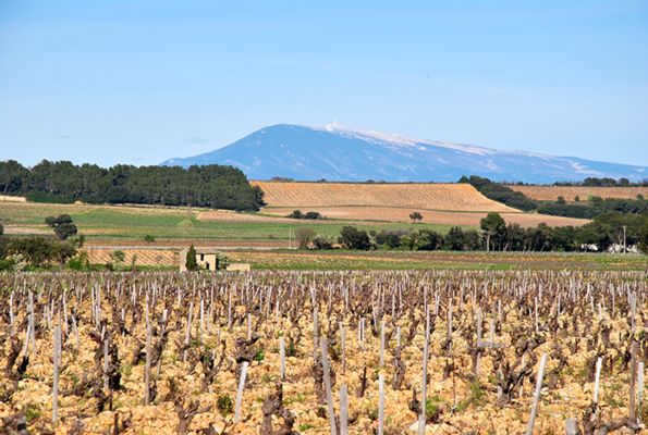 Terroir Galets roulés et Mont Ventoux